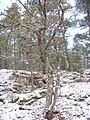 Yttereneby Nature reserve.JPG