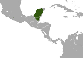 Yucatan Small-eared Shrew area.png