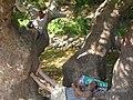 Yukarı Çağlar (Navahı) - Serper (Navahı bükü) (4) - panoramio.jpg