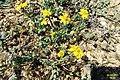 Zakynthos flora (35913386685).jpg