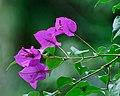 Zoo Purples (5361032971).jpg