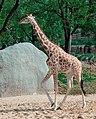 Zoo de Vincennes, Paris, France April 2014 (7), crop.jpg