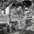 """""""Cipce v košu"""" (zaradi grozdja), Neblo 1953.jpg"""