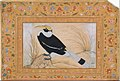 """Great Hornbill"", Folio from the Shah Jahan Album MET DT4809.jpg"