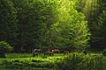 Όρος Βέρνο.jpg