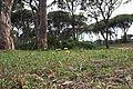 Δάσος Στροφυλιάς 11.jpg