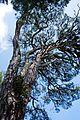 Δάσος Στροφυλιας 3!!.jpg