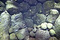 "Аквариум в павильоне ""Москвариум"", ВВЦ, Москва - panoramio (36).jpg"