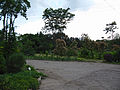 Ботанічний сад ДНУ 01.JPG