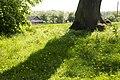 Дерево, що пам'ятає баронесу фон Мек та Чайковського.jpg