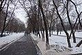 Деревья на проспекте Андропова - panoramio.jpg