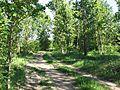 Дорожка - panoramio (8).jpg