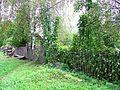 Заросли вьюнка в Глотове - panoramio.jpg