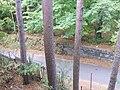 Комарово СПб Морская 5 вид с балкона.JPG