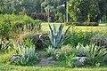Красота дендрології парку Феофанії.jpg