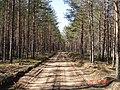 Лесная дорожка le chemin de forêt meža ceļš - panoramio - Aleksandrs Timofejev….jpg