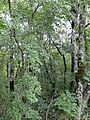 Лес в верхнем парке Сафари-парка - panoramio.jpg