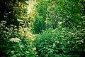 Парк, Кобрино 01.jpg