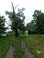 Парк ім. Т. Г. Шевченка, Прилуцький район, смт. Линовиця 74-241-5030 09.jpg