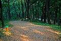 Парк ім. Федьковича в Чернівцях DSC 8982.jpg