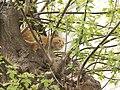 Россия, Нижегородская область, Балахна, кошка, 11-51 09.05.2006 - panoramio.jpg