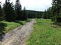 Спуск к ручью - panoramio.jpg