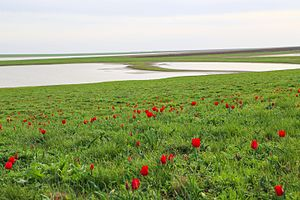 Orlovsky District, Rostov Oblast - Rostovsky Nature Reserve, Orlovsky District
