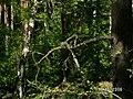 Чертик на дереве - panoramio.jpg