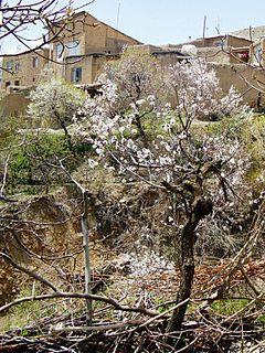 Tajareh, Saveh village in Markazi, Iran