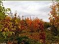 دیدنیهای پاییز مراغه - panoramio (8).jpg