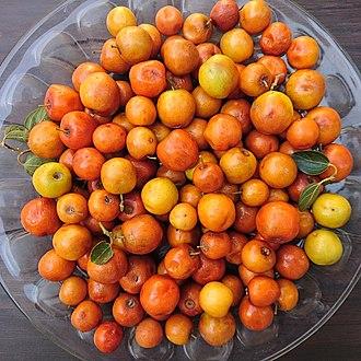 Ziziphus spina-christi - Ziziphus spina-christi fruit, Behbahan, Iran