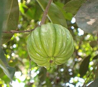 Garcinia gummi-gutta - Image: കുടപ്പുളി