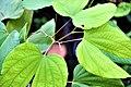 สิรินธรวัลลี Photographed by Trisorn Triboon (13).jpg