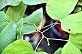 สิรินธรวัลลี Photographed by Trisorn Triboon (15).jpg