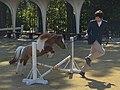 京都競馬場の馬事アトラクション「ミニチュアホースジャンプ」で飛越しているピノ号(2015年10月25日).JPG