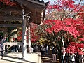 大井のお母さん寺の紅葉風景, Landscape of colored leaves in the Omi no Momiji Temple .jpg