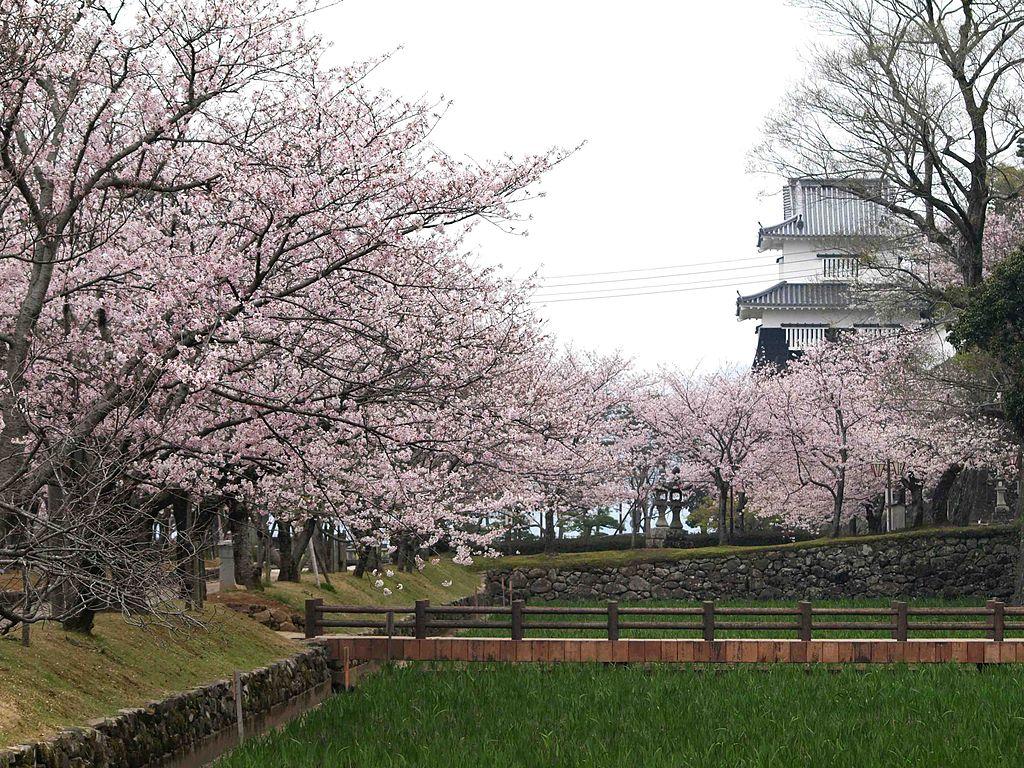 大村公園 桜