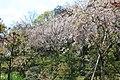 小丸山公園 - panoramio.jpg
