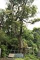 砥石山天疫神社 - panoramio (3).jpg