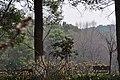 马鞍山森林公园 - panoramio (26).jpg