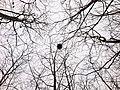 鳥巢 - panoramio.jpg