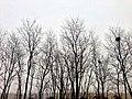 鳥巢 - panoramio (8).jpg