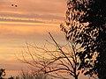 -2019-02-24 Yellow sunrise, Trimingham (3).JPG