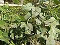 05537jfCabaducan East Beans Ambassador Village Nampicuan Nueva Ecijafvf 08.JPG