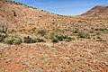 1117 Mountain - Flickr - aspidoscelis (5).jpg