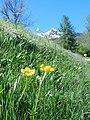 17-05 -2012 forse è primavera..ma ieri... - panoramio.jpg