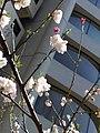 1 Chome Minamiaoyama, Minato-ku, Tōkyō-to 107-0062, Japan - panoramio - hello-go (3).jpg