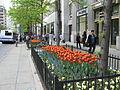 20070509 Tulip Days.JPG