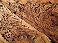 2011-11-30 21-25-37-scolytinae-sp.jpg