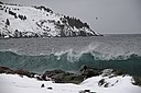 2011 - FEB 12 - 22 - NEWFOUNDLAND -061 near Torbay (5453353530).jpg